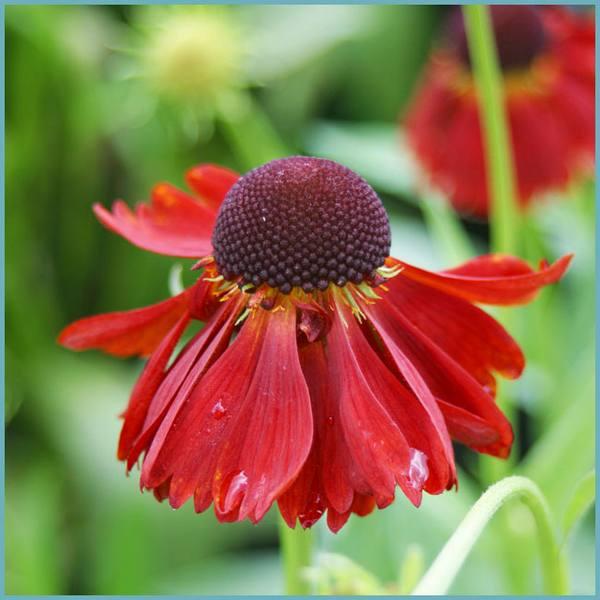 Желтые цветы с весны до осени: 50 видов цветов для