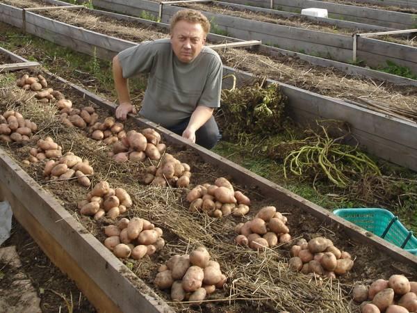 Нетрадиционные технологии выращивания картофеля 32